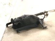 2nd Oct 2020 - Bat on the porch
