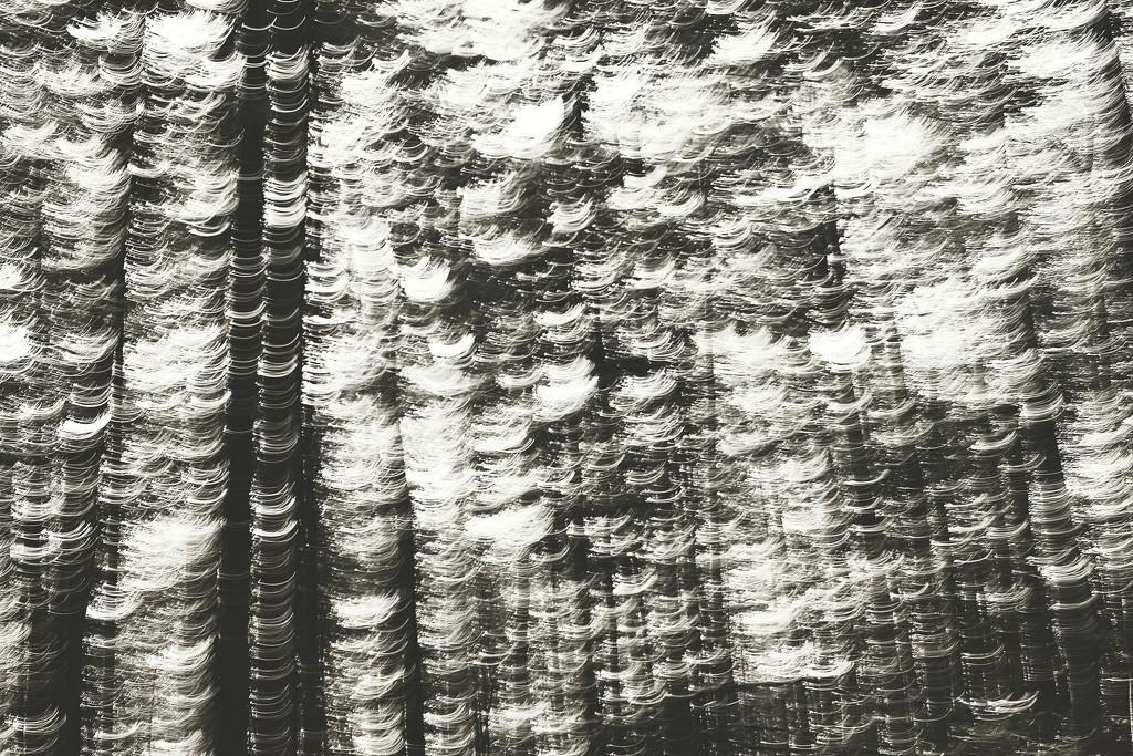 Lightwrap by juliedduncan