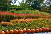 3rd Oct 2020 - The Dallas Arboretum's pumpkin festival