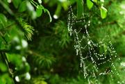 3rd Oct 2020 - spider's network