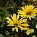 Spring Flowers 1 by ninaganci