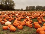 3rd Oct 2020 - Pumpkin Time