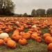 Pumpkin Time by phil_sandford