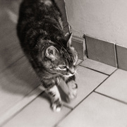 1st Oct 2020 - Lensbaby cat on patrol...