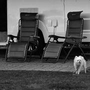 14th Aug 2020 - Dog watch