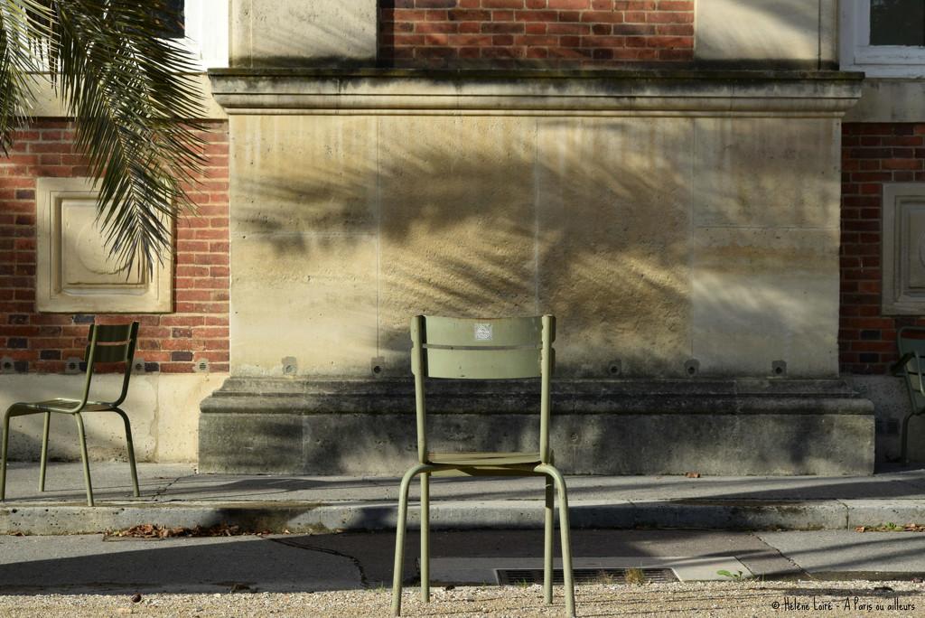 Palm shadow by parisouailleurs