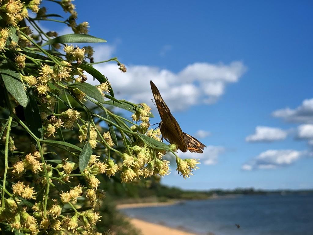 Butterfly beach by missdeb