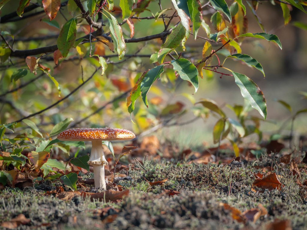 In the fall by haskar