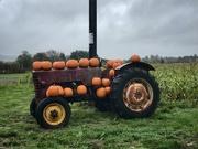 3rd Oct 2020 - Pumpkin season