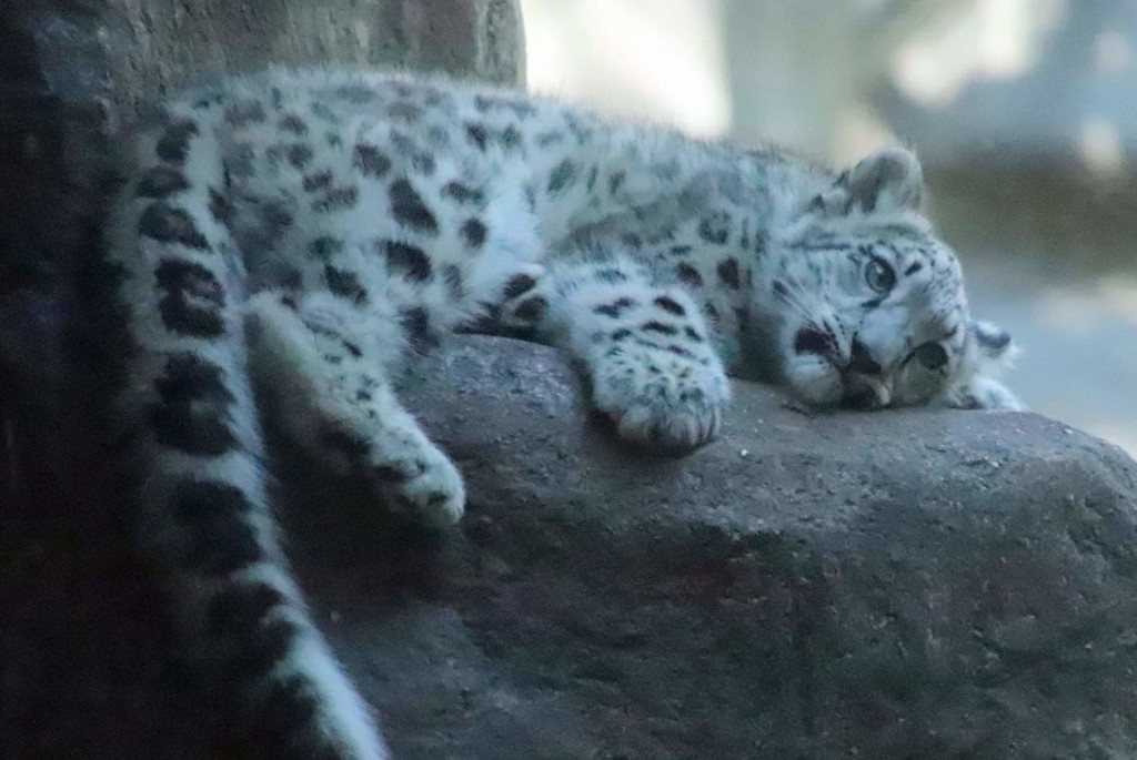 Nap Time For 4 Month Old Ahava by randy23
