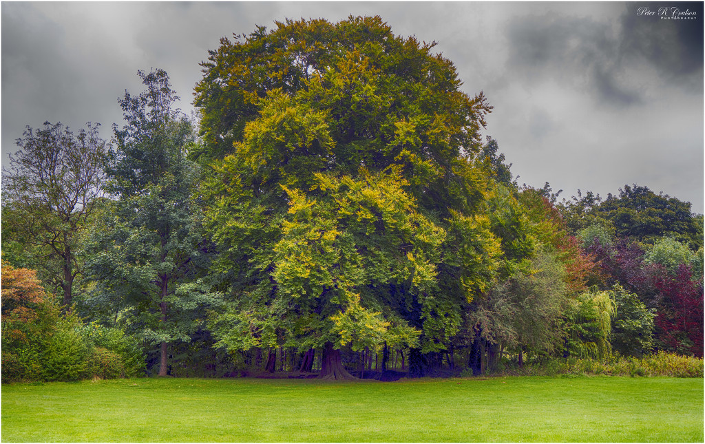 HDR Trees by pcoulson