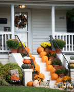 3rd Oct 2020 - The neighbors welcome autumn