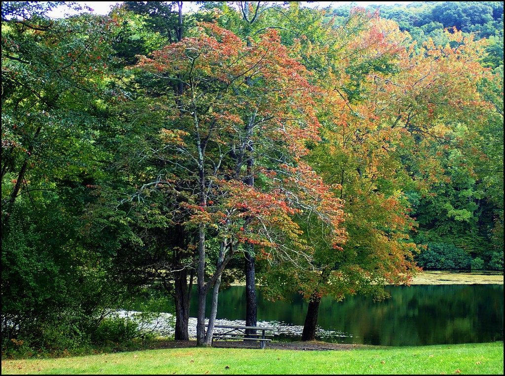 Autumn Comes to the Poconos by olivetreeann
