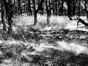 1st Oct 2020 - woods
