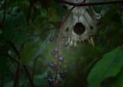 1st Oct 2020 - dark berries