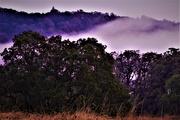 1st Oct 2020 - Misty Morning at Baskett Slough