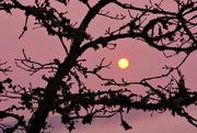 2nd Oct 2020 - Magenta Sky; Orange Sun