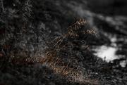 4th Oct 2020 - Sparkles On A Muddy Walk
