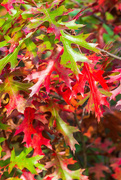 6th Oct 2020 - Voyageurs Red Colors