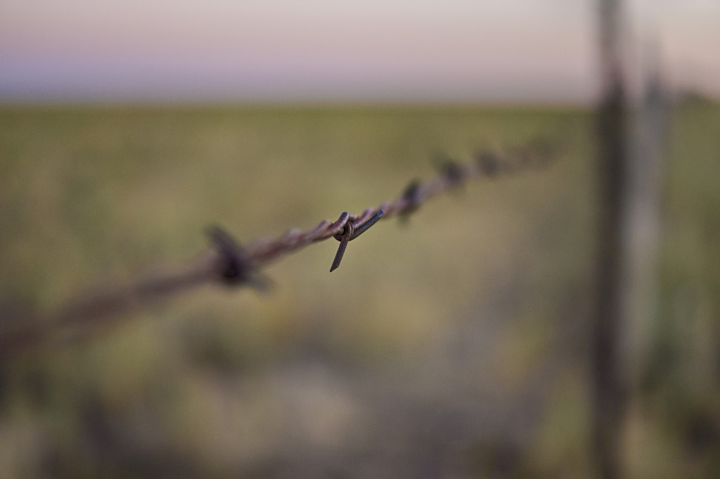 Barbed by joysabin
