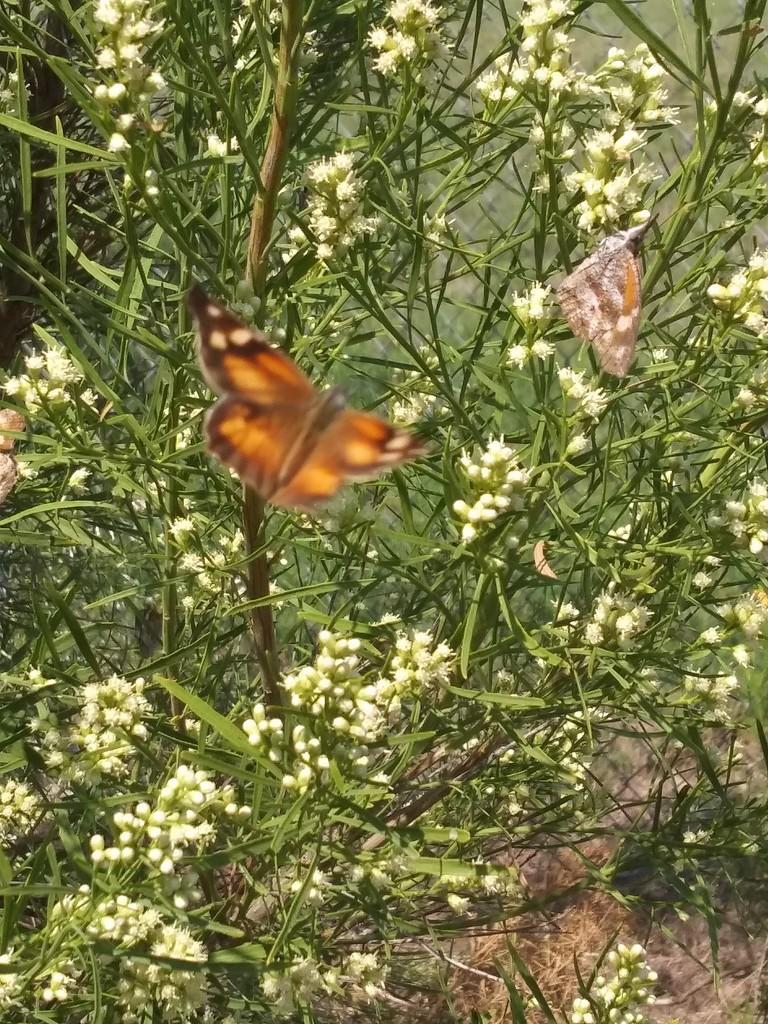 Butterfly in Flight  by missjenn