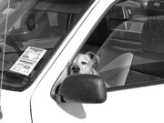 2nd Oct 2020 - dogs in cars