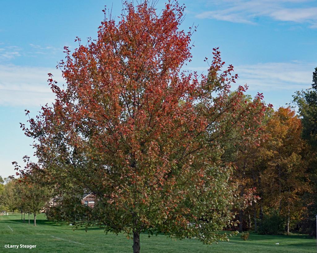 Fall colors near the soccer fields by larrysphotos