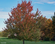 4th Oct 2020 - Fall colors near the soccer fields