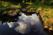 4th Oct 2020 - Reflections in a Stream