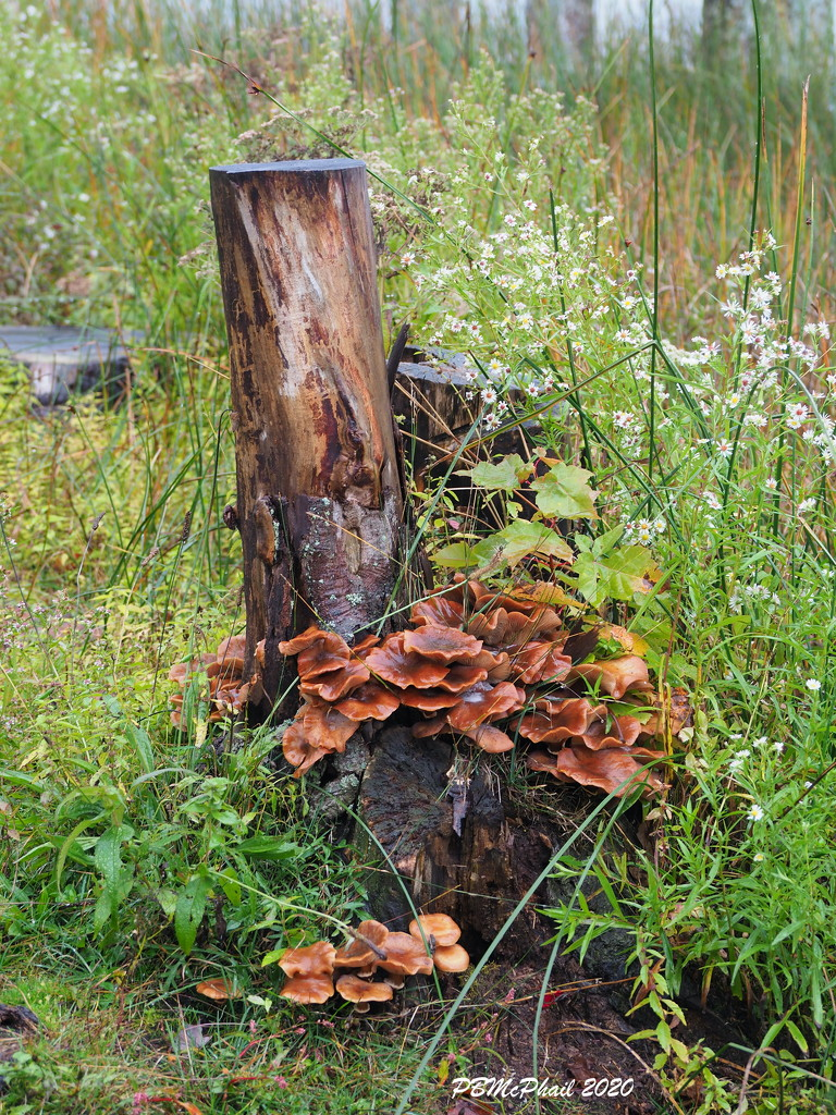 Fungi by selkie