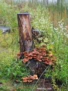4th Oct 2020 - Fungi