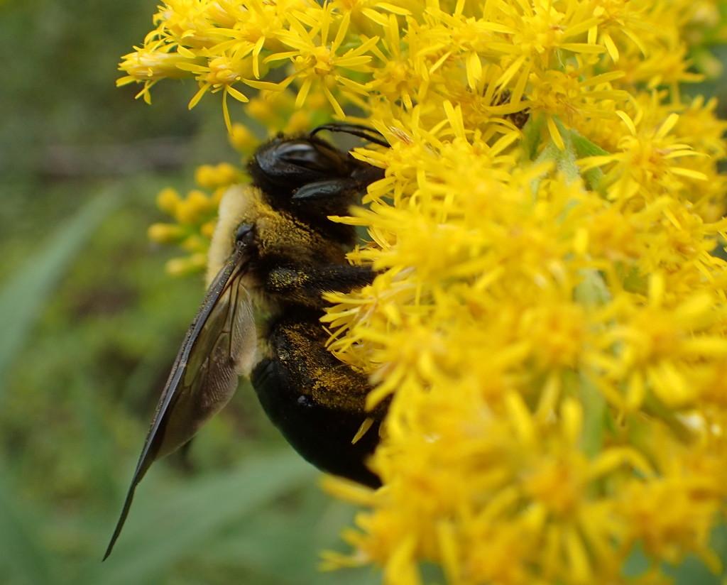 Pollinator by cjwhite