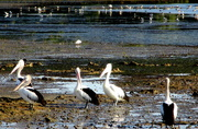 5th Oct 2020 - Along the Wynnum fore shore