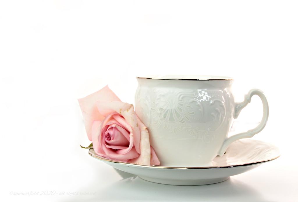 tea rose, a study in high key by summerfield