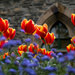 Spring tulips by maureenpp