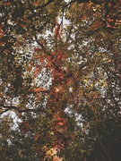 5th Oct 2020 - Autumn in the park