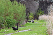 5th Oct 2020 - On my walking track today