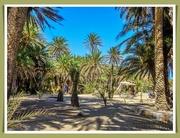 5th Oct 2020 - Vai,Crete 1