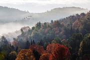 5th Oct 2020 - Misty Morning Forest