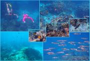 5th Oct 2020 - Underwater