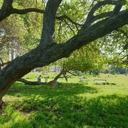 5th Oct 2020 - The magic faraway tree