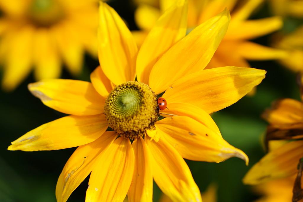 more yellow sunshine by quietpurplehaze