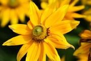 5th Oct 2020 - more yellow sunshine