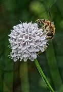 3rd Oct 2020 - 1004 - The Pollinator