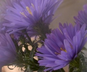 5th Oct 2020 - Asters..........