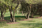 5th Oct 2020 - Wooded area local park