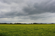 5th Oct 2020 - Back to the Rapeseed fields