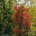 Fall Finery