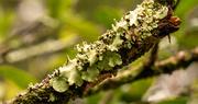 5th Oct 2020 - A Little Bit of Lichen!