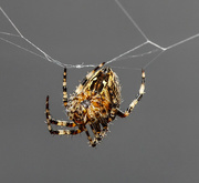 5th Oct 2020 - Spider.